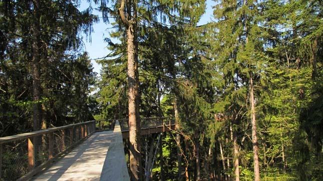 Kilátó a Bajor Nemzeti Parkban