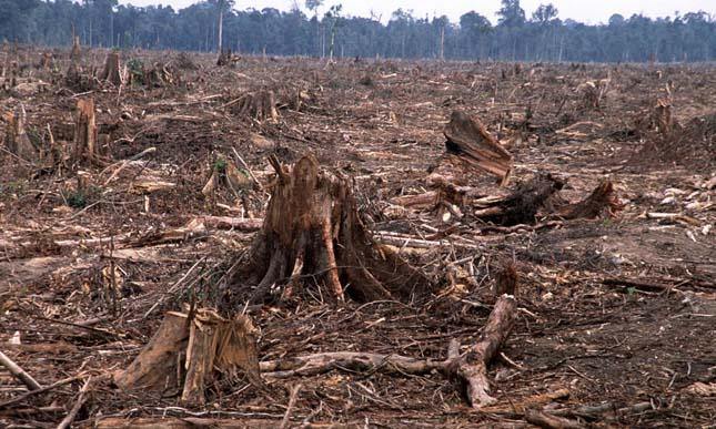 """Képtalálat a következőre: """"erdőírtás"""""""