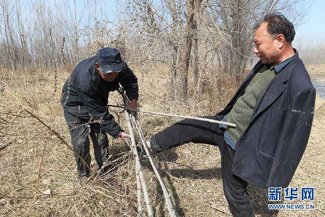 Tízezer fát ültettek