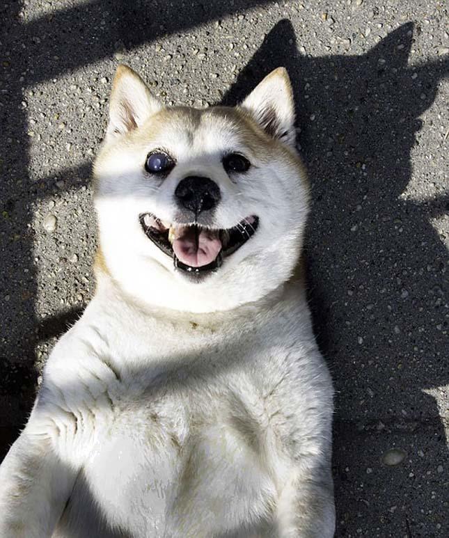 Fahéj kutyus