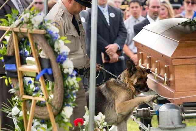 Egy rendőrkutya búcsúja elhunyt társától
