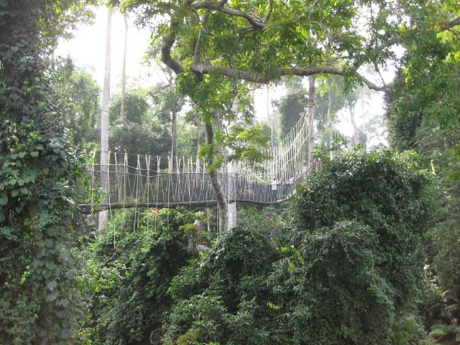 Függőhidak esőerdőkben