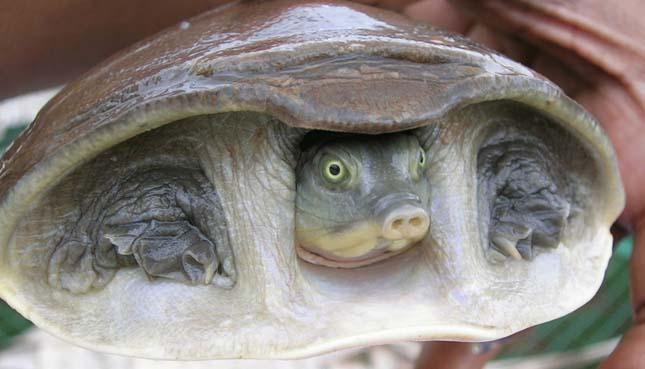 A legfurcsább teknősök