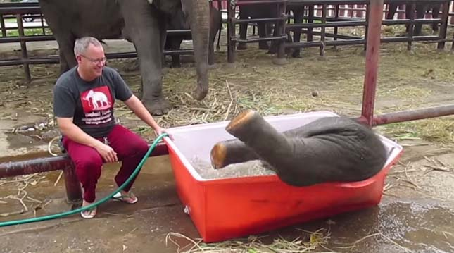 Fürdőző kiselefént