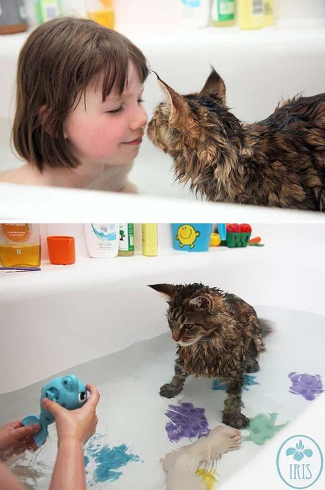 Fürdőző macskák