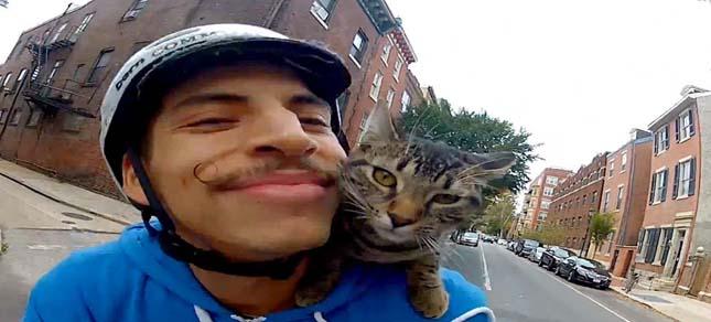 Biciklis futár macska