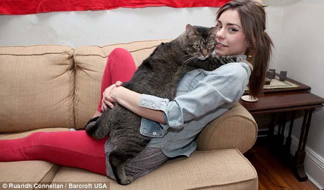 Kövér cica