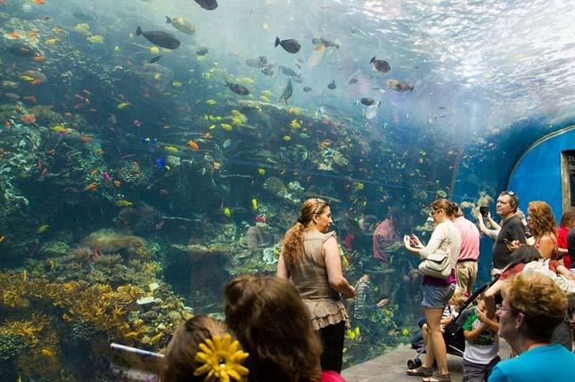 Georgia Akvárium