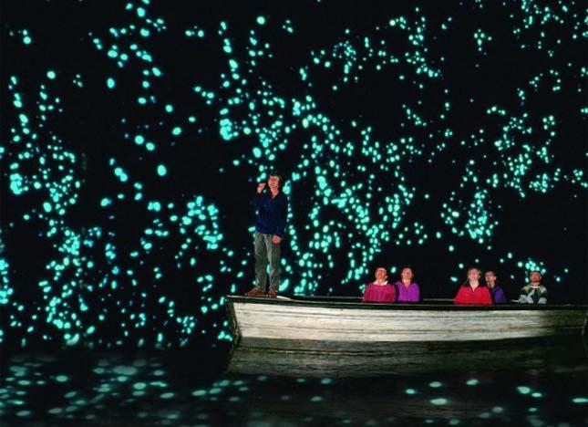Szentjánosbogár barlang, Új-Zéland
