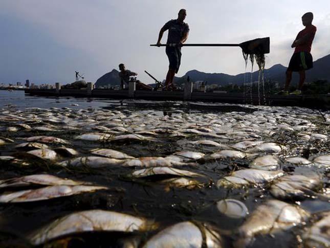 Halpusztulás Rio De Janeiro