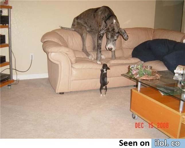 Hatalmas kutyák