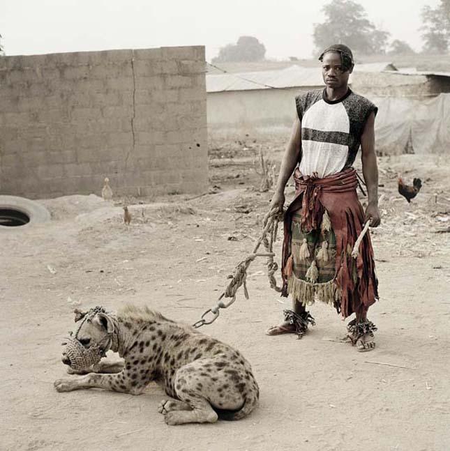 A nigériai hiéna szelídítők, Pieter Hugo fotói