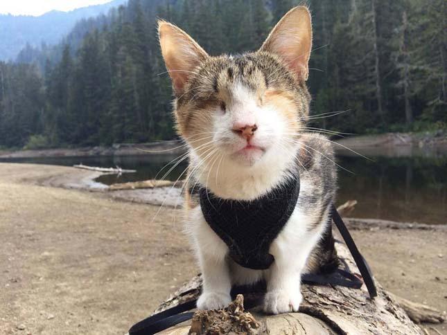 Túrázó vak cica