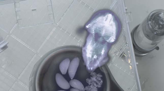 Hörcsög a röntgen alatt
