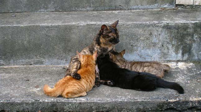 Houtong, a macskák városa