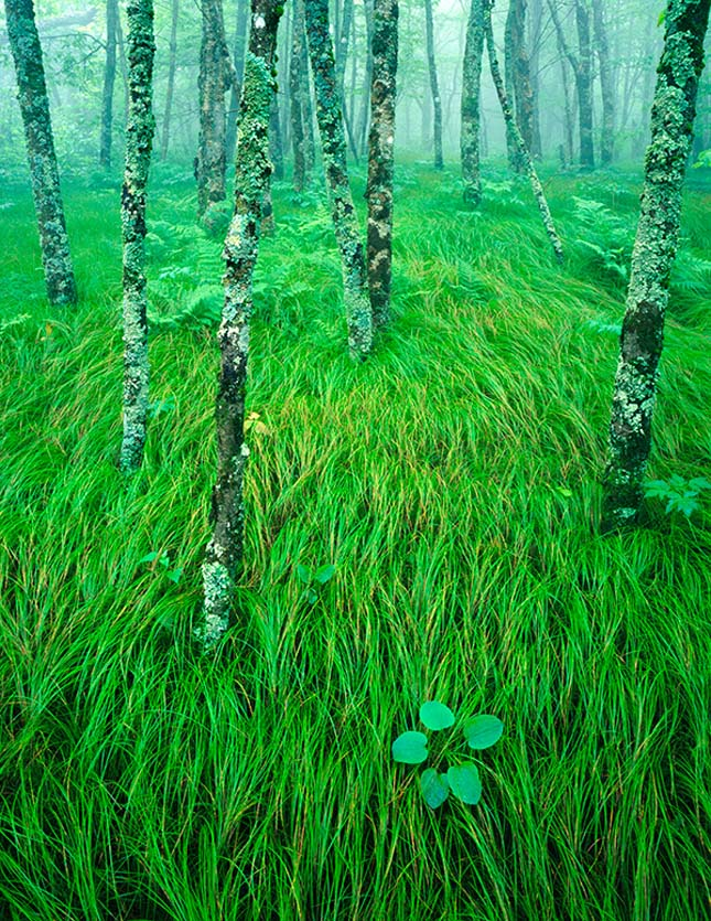 Ian Plant természetfotói