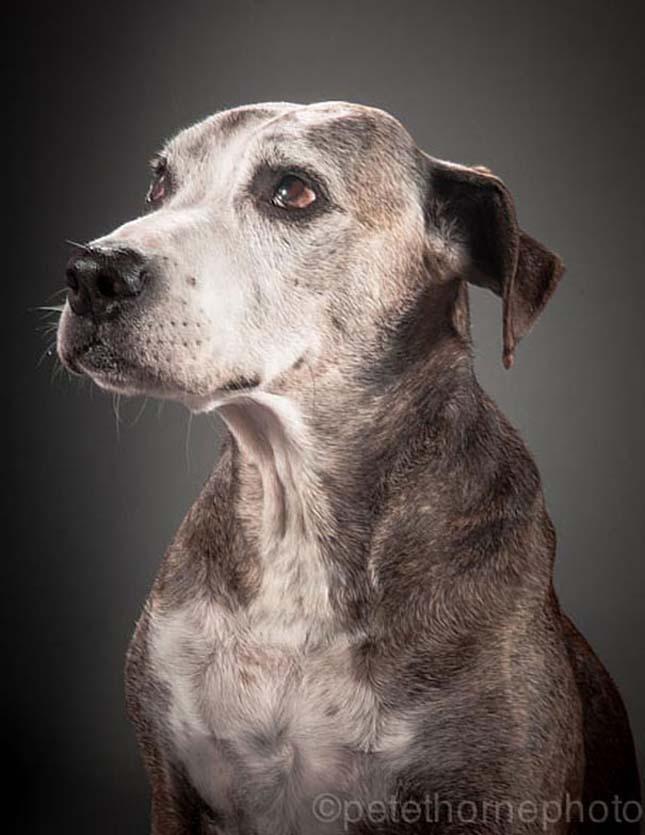 Idős kutyák