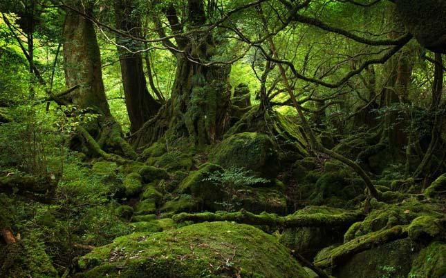 Jakusima-sziget, Japán