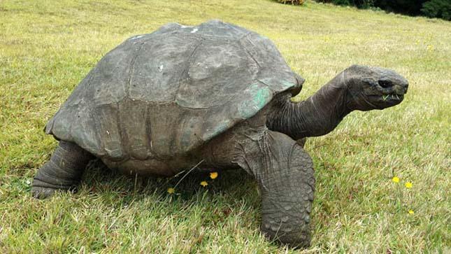 Jonathan teknős