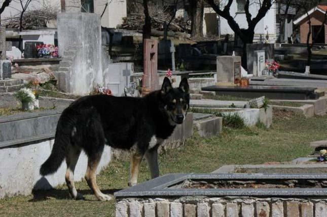 Hat éve őrzi gazdája sírját a hűséges kutya