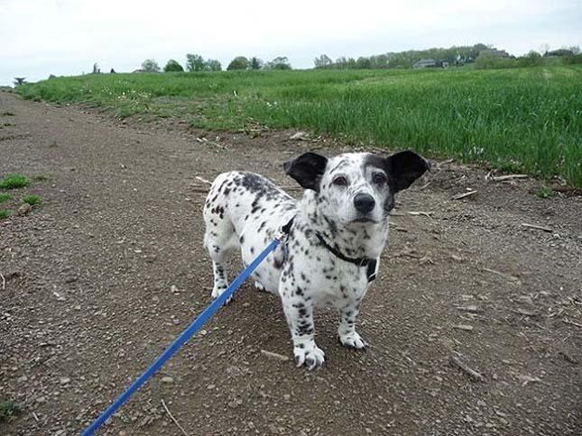 Keverék kutya