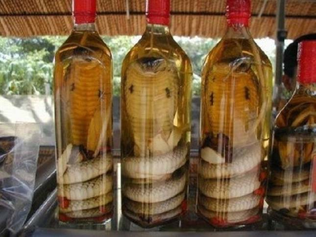 Kígyó bor