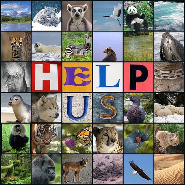 Kihalás fenyegette fajok