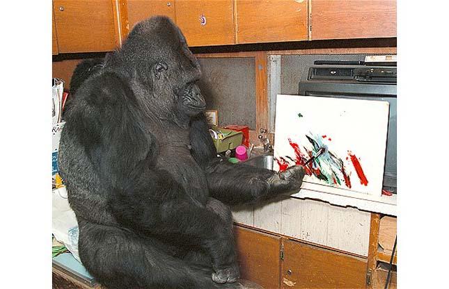 Koko, a gorilla