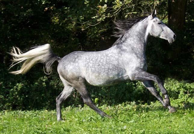 Különleges színű ló