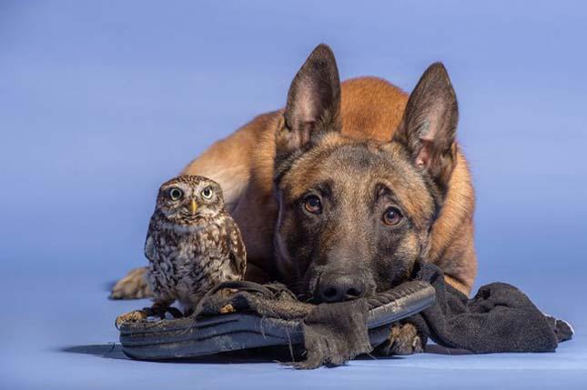 Kuya és bagoly barátság
