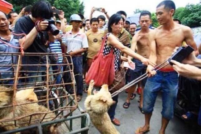Kutyák kínzása a kínai Jülin városi kutyafesztiválon