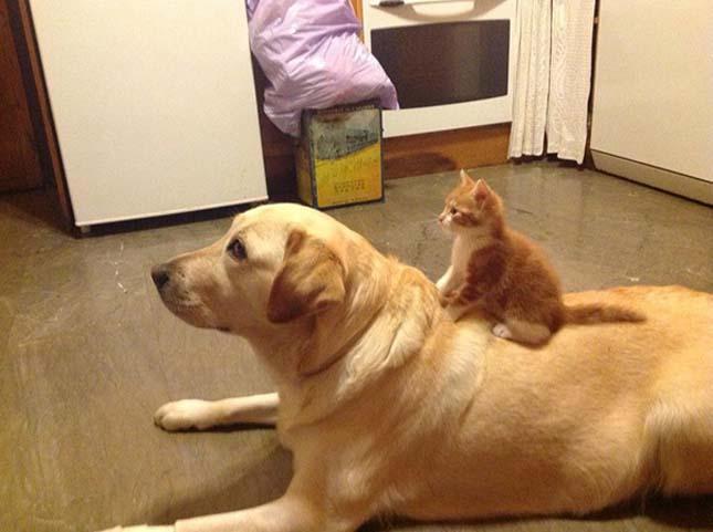Kutya macska barátságok