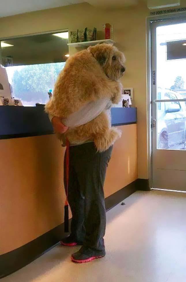 Gazdájukat ölelő kutyák