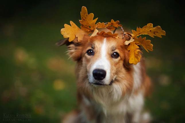 Kutya portrék