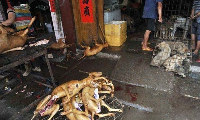 Kutyahús fesztivál