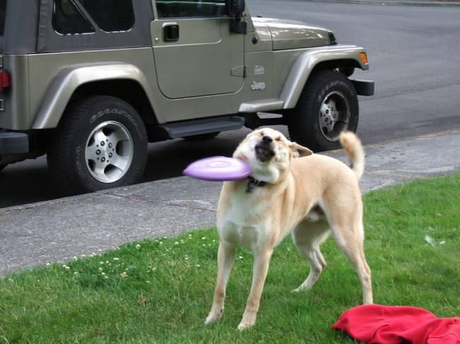 kutyák, akinek félresiklott az élete