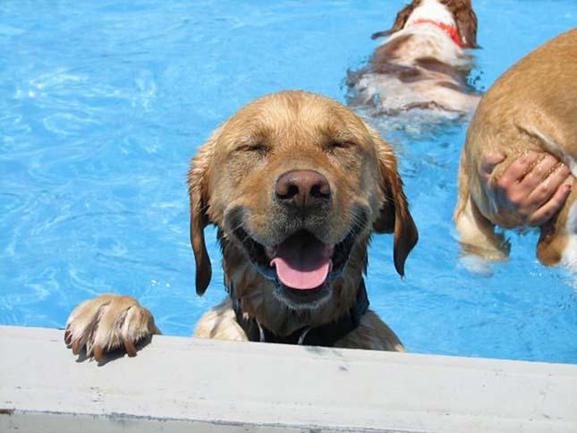 Kutya medencés buli