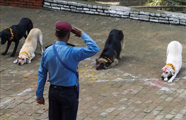 Kutyaünnep nepálban