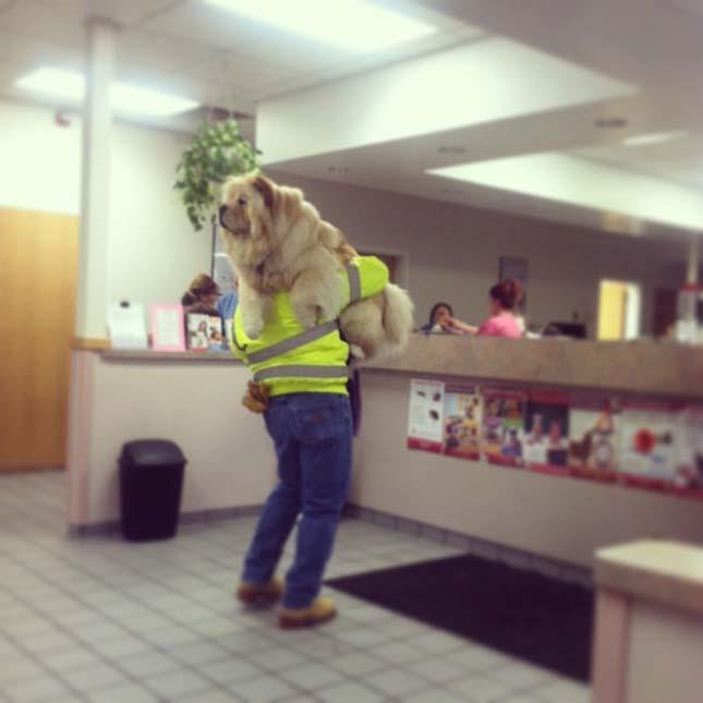 Kutyusok az állatorvosnál