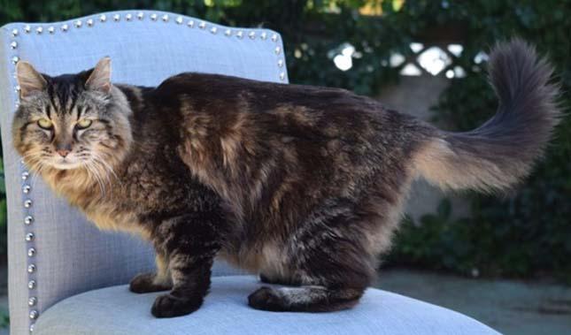 Legidősebb macska