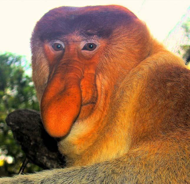 A legrondább állatok