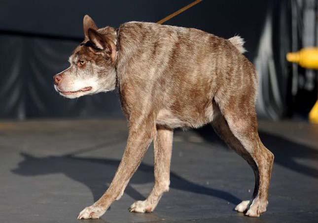 Legrondább kutya