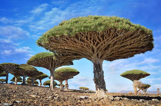 Különleges fák