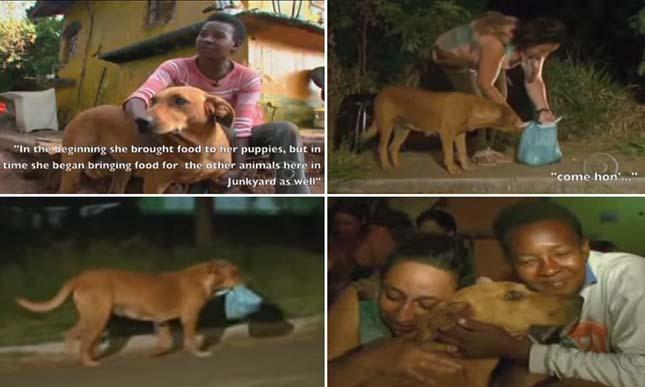 Lilica kutya