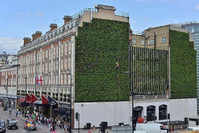 Londoni függőleges kert