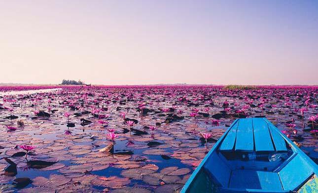 Lótusz tó
