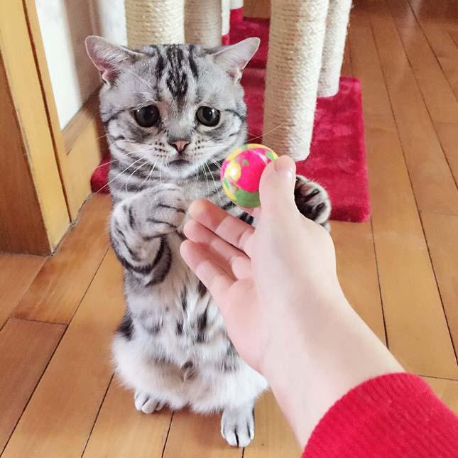 A legszomorúbb macska