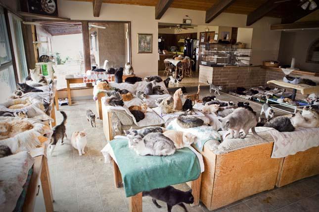 Macskamenhely lett egy amerikai nő házából