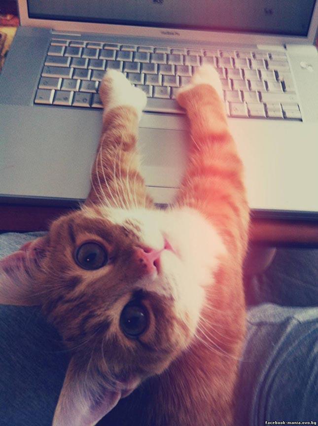 Macskák a személyes térben