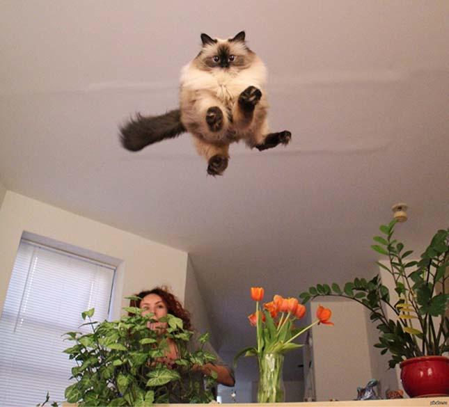 Macskás képek